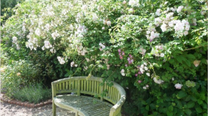 Gardens, Cheristow Lavender B&B, lovely ground floor, triple room in Hartland