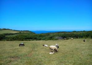 The farm and view of Lundy at East Titchberry Farm Cottage, Hartland