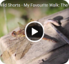 Wild Shorts - My favourite walk: the Spekes Valley
