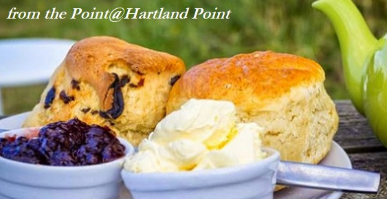 Delicious cream tea from The Point@Hartland Point, wonderful, extensive outdoor cafe on the SWCP coastpath