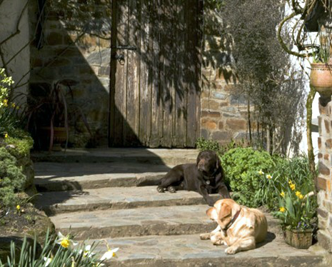 Dogs welcome at Docton Mill Gardens & Tea room - open Mar - Oct