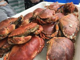 Fresh crab at Clovelly, Hartland, North Devon - fabulous local food and drink