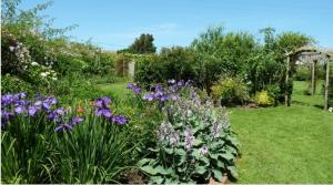 Some of the gardens at Cheristow Lavender, Hartland, North Devon