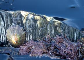 Rockpools by Rob Seymour Photography, Hartland, North Devon All rights reserved