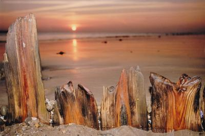 Wood on the shore, by Rob Seymour Photography, Hartland, North Devon