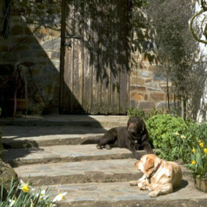 Dogs welcome at Docton Mill Gardens & Tea Room, Hartland, North Devon