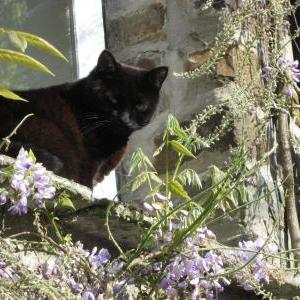 The resident cat at Docton Mill Gardens & Tea Room, Hartland, North Devon