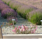 Cheristow Lavender B&B, lovelyl ground floor, triple room in Hartland, North Devon